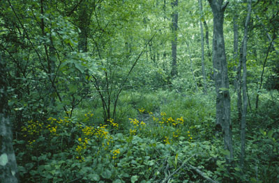 Forested wetland image, source US Fish & Wildlife Service