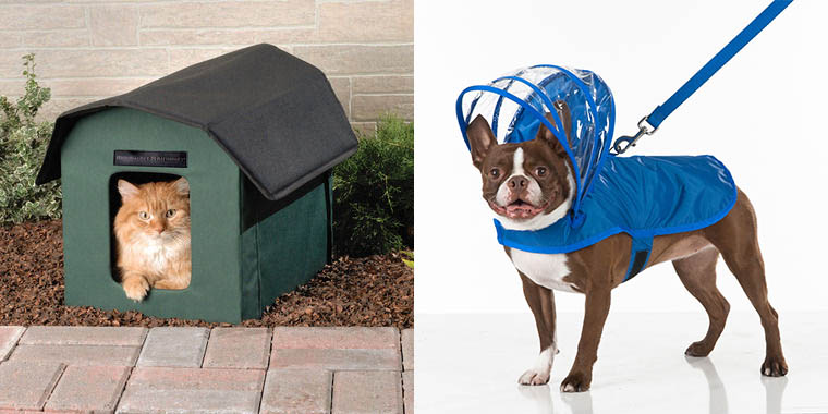 Skymall abounds with pet product potential nominees including the heated cat house and the dog umbrella.